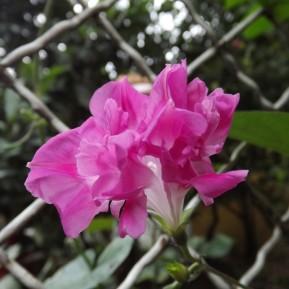 wp-1485982847542.jpg