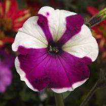 Flores_en_mi_camino_97_by_dblue99