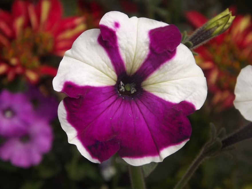 Flores_en_mi_camino_97_by_dblue99.jpg