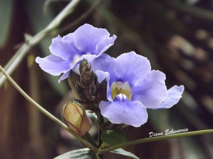 flores en mi canimo 17