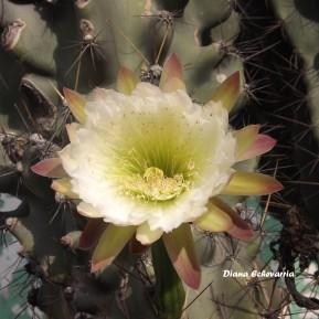 flores_en_mi_camino_19