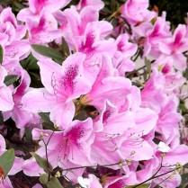 picsart_01-10-03.23.14.jpg