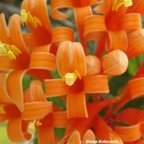 flores_en_mi_camino_114_by_dblue99-d9oyl3m
