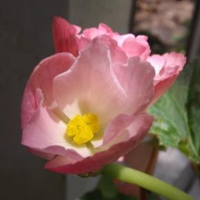 flores_en_mi_camino_84_by_dblue99-d7ta7te