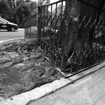 raices_urbanas___escapando_sigilosamente_by_dblue99-d7qb85v