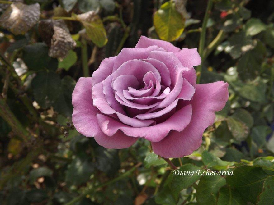 flores_en_mi_camino