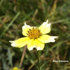 flores_en_mi_camino_119_by_dblue99-d9pxnc1