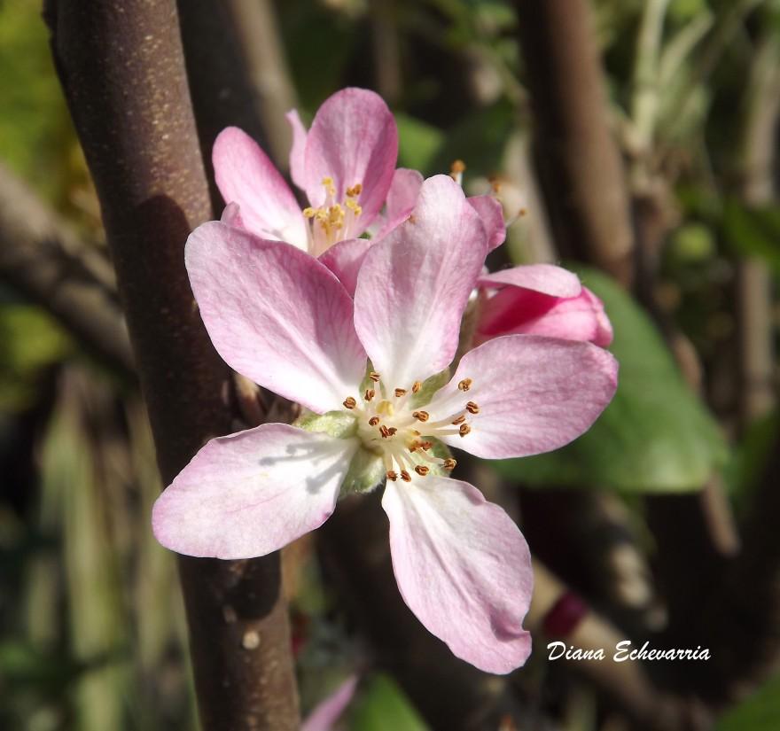 flores_en_mi_camino_99 2