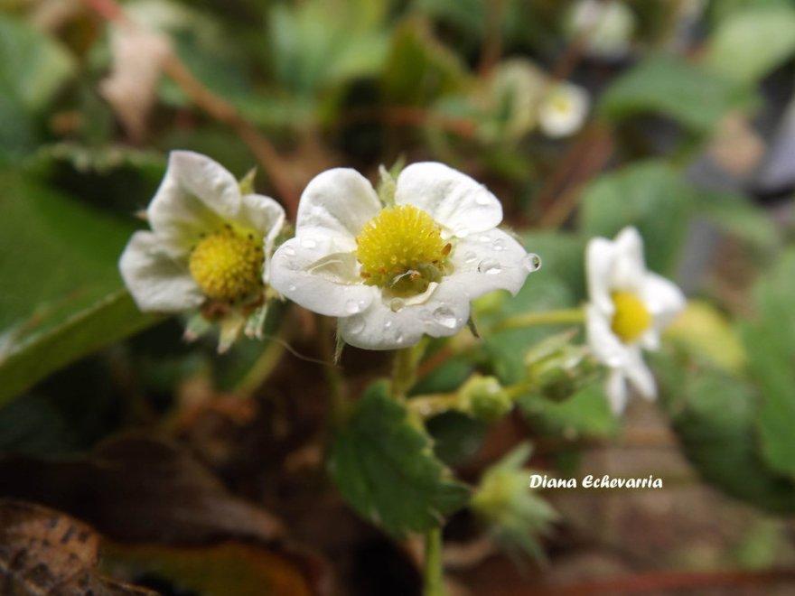 flores_en_mi_camino_118