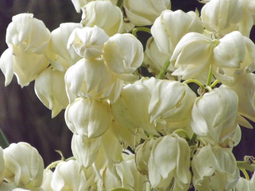 flores_en_mi_camino_61