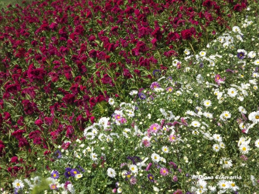 campo_de_flores