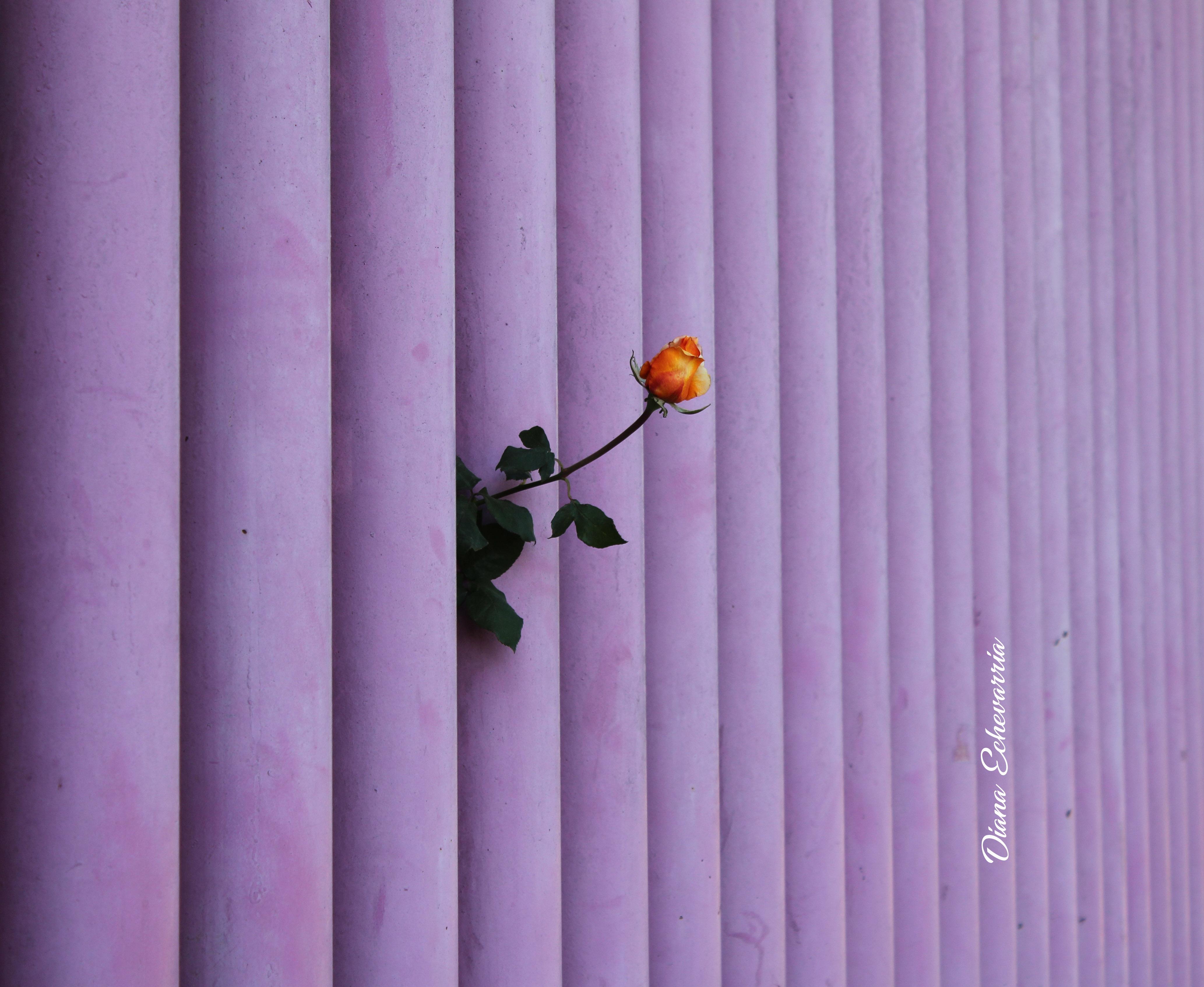 Flors en mi camino 61